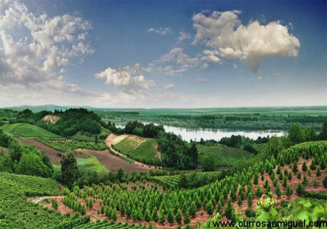 Como si de la Ribera del Duero se tratara, a las afueras de Serbia descubriremos sus viñedos